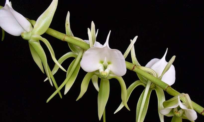 Jedna trzecia roślin tropikalnych w Afryce zagrożona wyginięciem