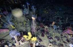 Kolorowe formy życia pod lodem Antarktyki