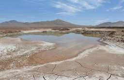 Pustynia Atakama po opadach deszczu