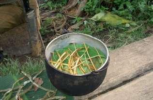 DMT, główny składnik halucynogennego napoju ayahuasca, stymuluje tworzenie nowych neuronów