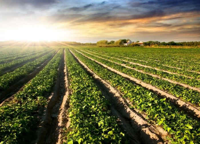 Biomasa, zachód słońca na polu
