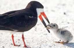 Ptak karmiący pisklę niedopałkiem papierosa