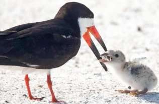 Ptak karmiący pisklę niedopałkiem papierosa. Zdjęcie, które z miejsca stało się symbolem zanieczyszczenia środowiska