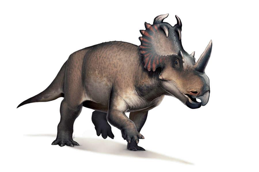 Nowotwór złośliwy po raz pierwszy wykryty u dinozaura
