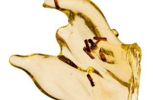 Wyizolowano DNA owadów zatopionych w żywicy