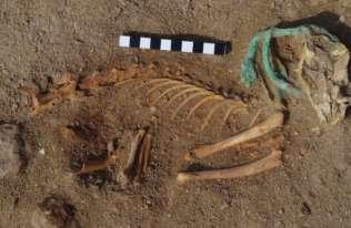 Egipt: najstarszy na świecie cmentarz zwierząt domowych odkryty przez Polaków