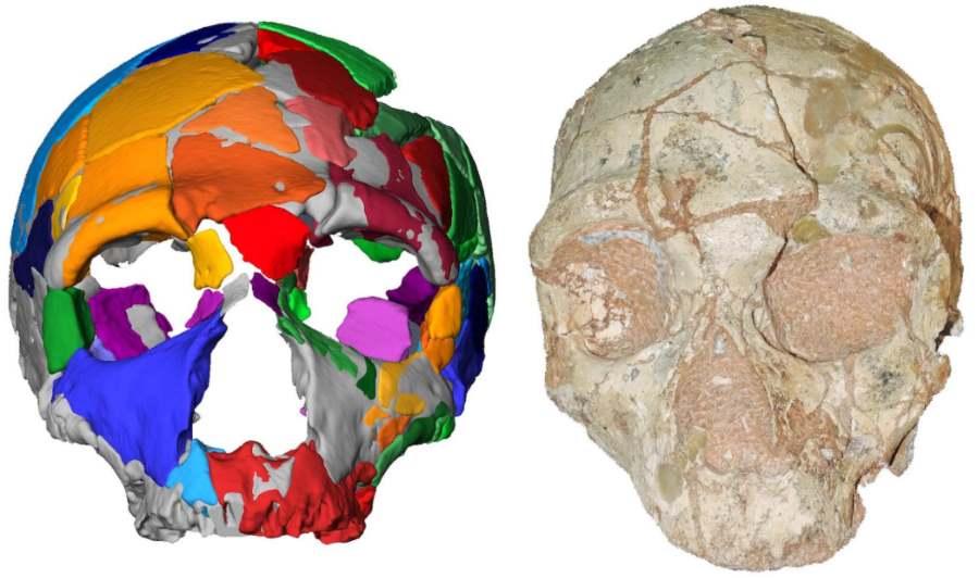 Skamieniałe czaszki znalezione w jaskini Apidima w Grecji