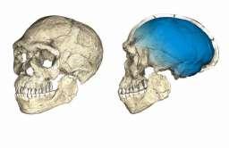 Rekonstrukcja czaszki wczesnych osobników z gatunku Homo sapiens