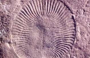 Badania wskazują, że ludzie są zaskakująco podobni do osobliwych stworzeń sprzed pół miliarda lat