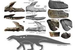 Nowy gatunek prehistorycznego gada odnaleziony w Kocurach