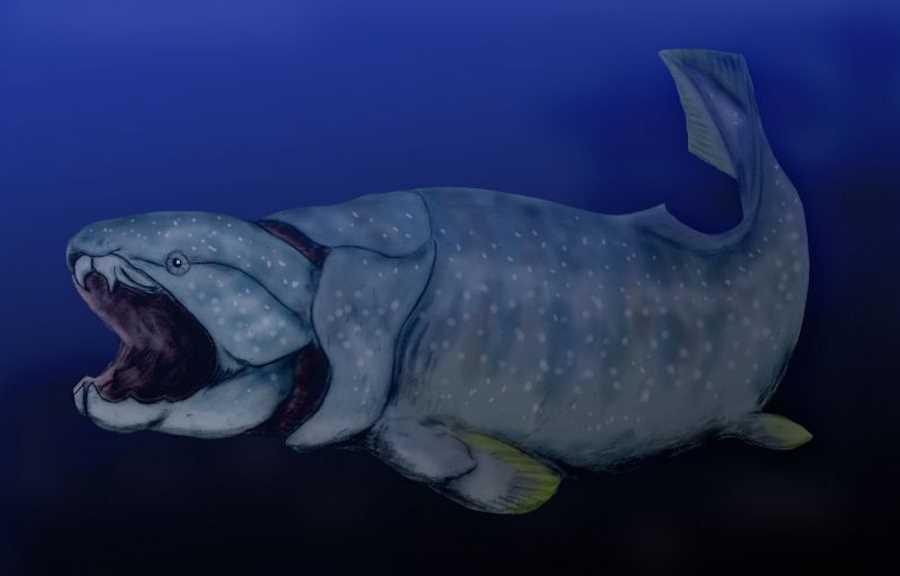 Opancerzona ryba z gatunku Dunkleosteus