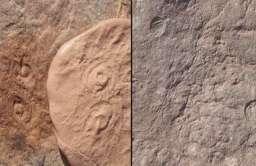 Skamieliny fauny ediakarańskiej