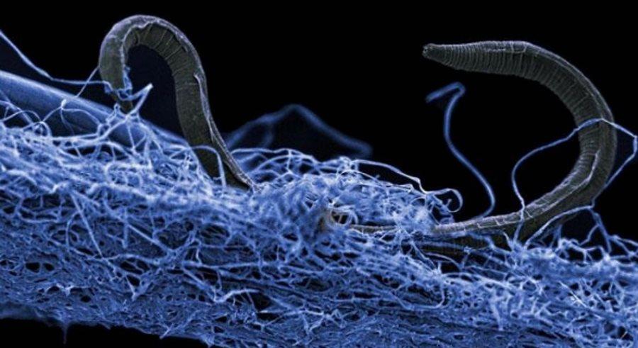 Mikroskopijne organizmy znalezione pod ziemią