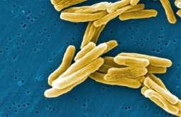 Prątek gruźlicy
