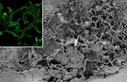 Skamieliny grzybów sprzed 715 mln lat