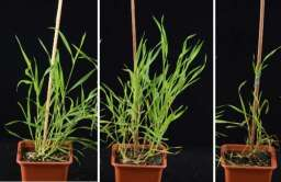 Herbicydy o zwiększonej efektywności