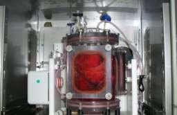 Płuca hodowane laboratoryjnie