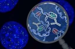 Nowa struktura DNA