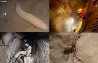 Nieznane gatunki z Jaskini Wieriowkina