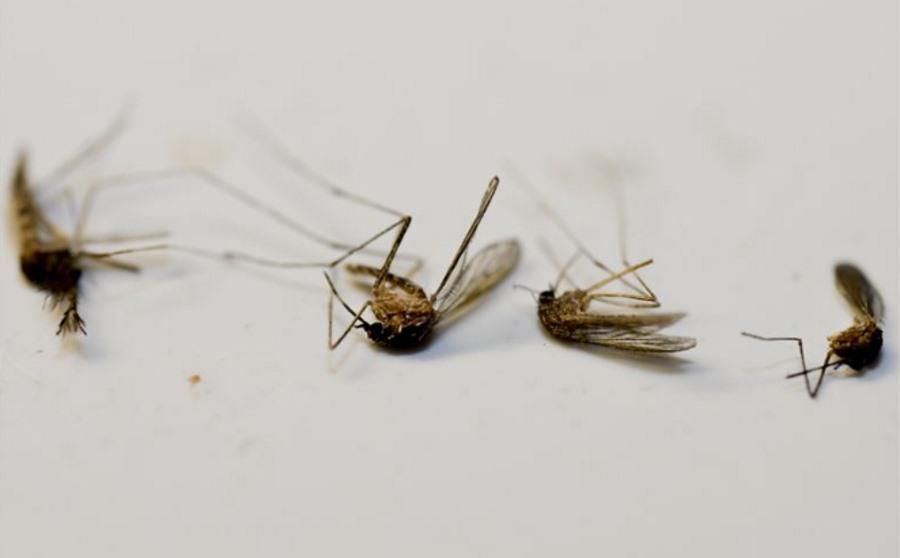 Martwe komary