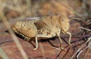 Zagłada owadów może mieć katastrofalne skutki dla ludzkości