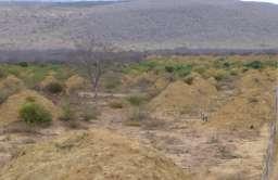 Kopce termitów