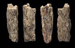 Kości Denny - dziecka neandertalki i denisowianina