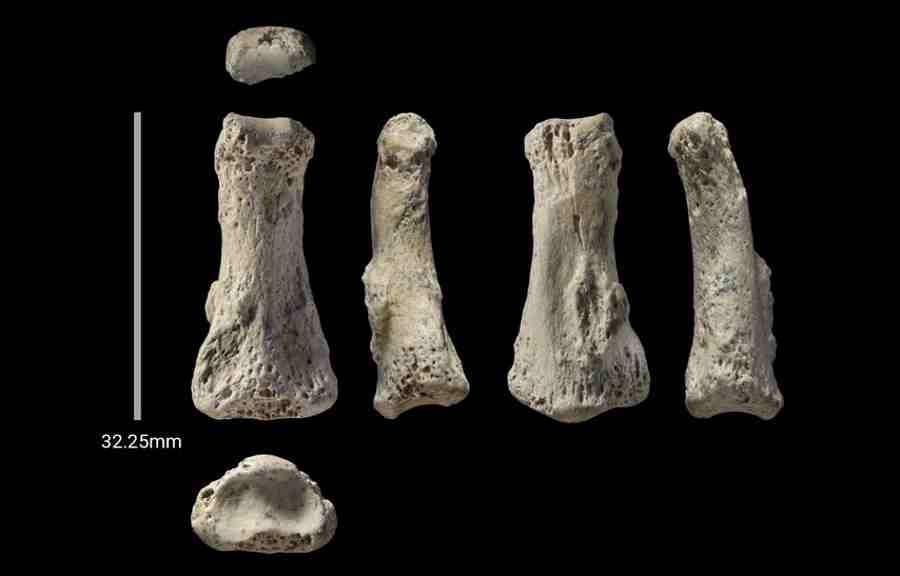 Skamieniałe kości palca