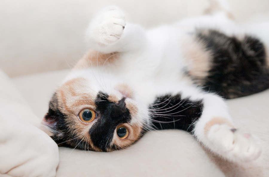 Karma dla kota - dlaczego jej dobór jest tak ważny?