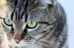 Koty tworzą silne więzi z opiekunami, podobnie jak dzieci i psy