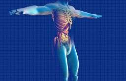Układ anatomiczny człowieka