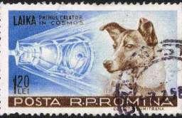Znaczek pocztowy z psem Łajka