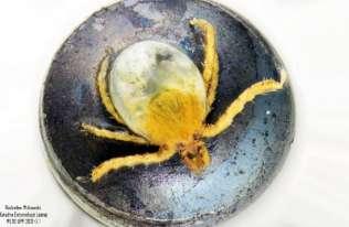 Już larwy kleszczy mogą być nosicielami babeszjozy