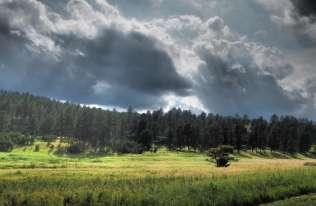 Sadzenie lasów może ochłodzić planetę bardziej, niż do tej pory sądzono