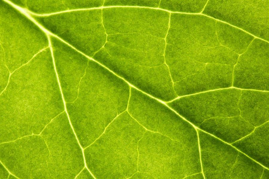 Jedna z zagadek fotosyntezy rozwikłana m.in. przez Polaka