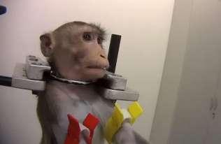 Okrutne testy na zwierzętach w niemieckim laboratorium