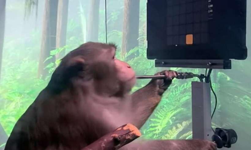 Małpa z implantem w głowie gra w grę wideo za pomocą myśli. Neuralink publikuje nagranie