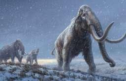 Zsekwencjonowano najstarsze DNA w historii. Pochodzi od mamuta żyjącego 1,2 mln lat temu