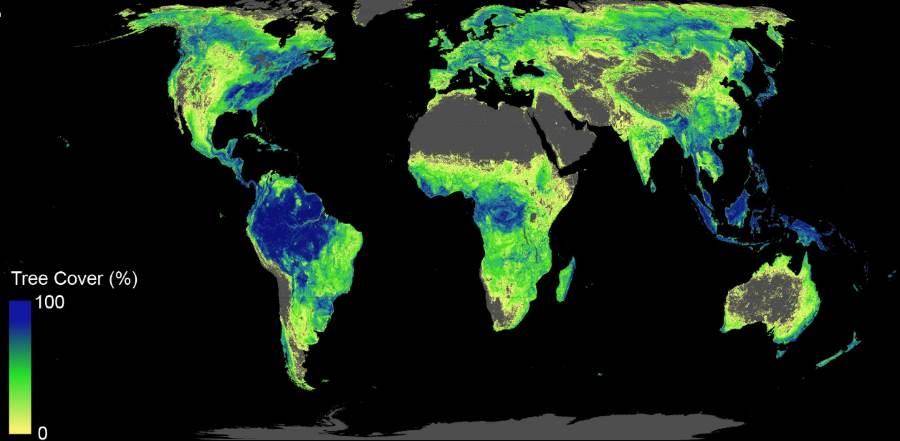 Mapka dostępnej powierzchni, gdzie mogą rosnąć drzewa