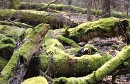 Martwe drewno w lesie to nie marnotrawstwo. To warunek różnorodności biologicznej