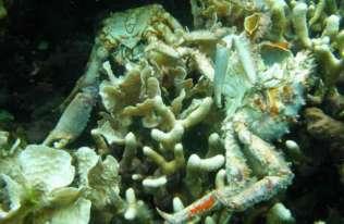 Martwe strefy w oceanach
