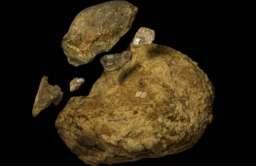 Kości Mastodonta