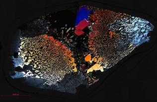 Próbka skał spod dna Oceanu Indyjskiego z mikroorganizmami