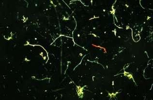 Śmietnik na dnie mórz i oceanów. Ogromne ilości mikroplastiku zalegają w głębinach