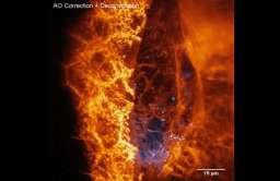Obraz pojedynczych komórek w organizmie
