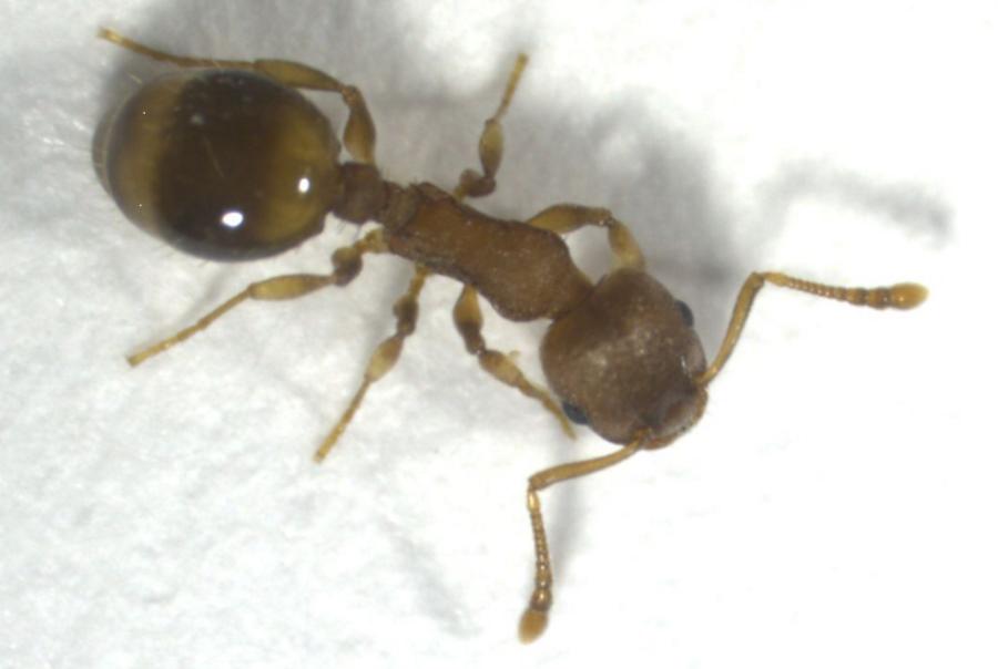 Mrówki reagują na izolację społeczną podobnie jak ludzie
