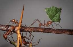 Nowa substancja przeciwgrzybiczna odkryta w... mrowisku