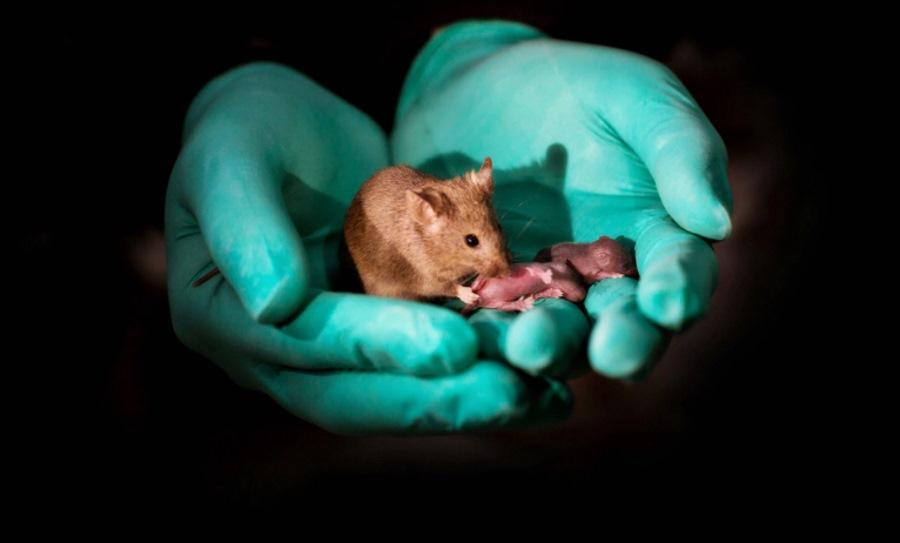Mysz z młodymi