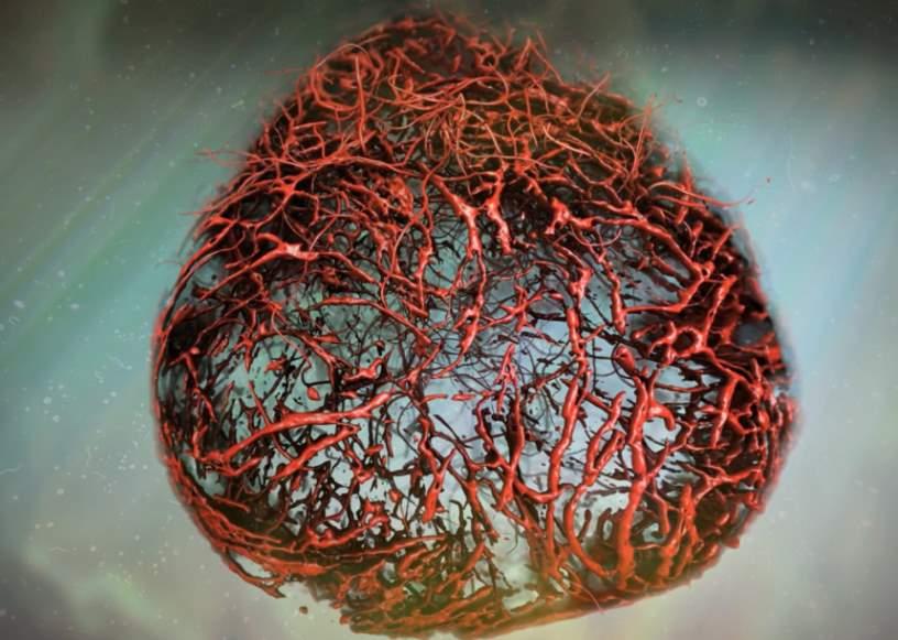 Naczynie krwionośne