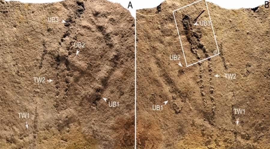 Ślady stworzeń sprzed 550 mln lat